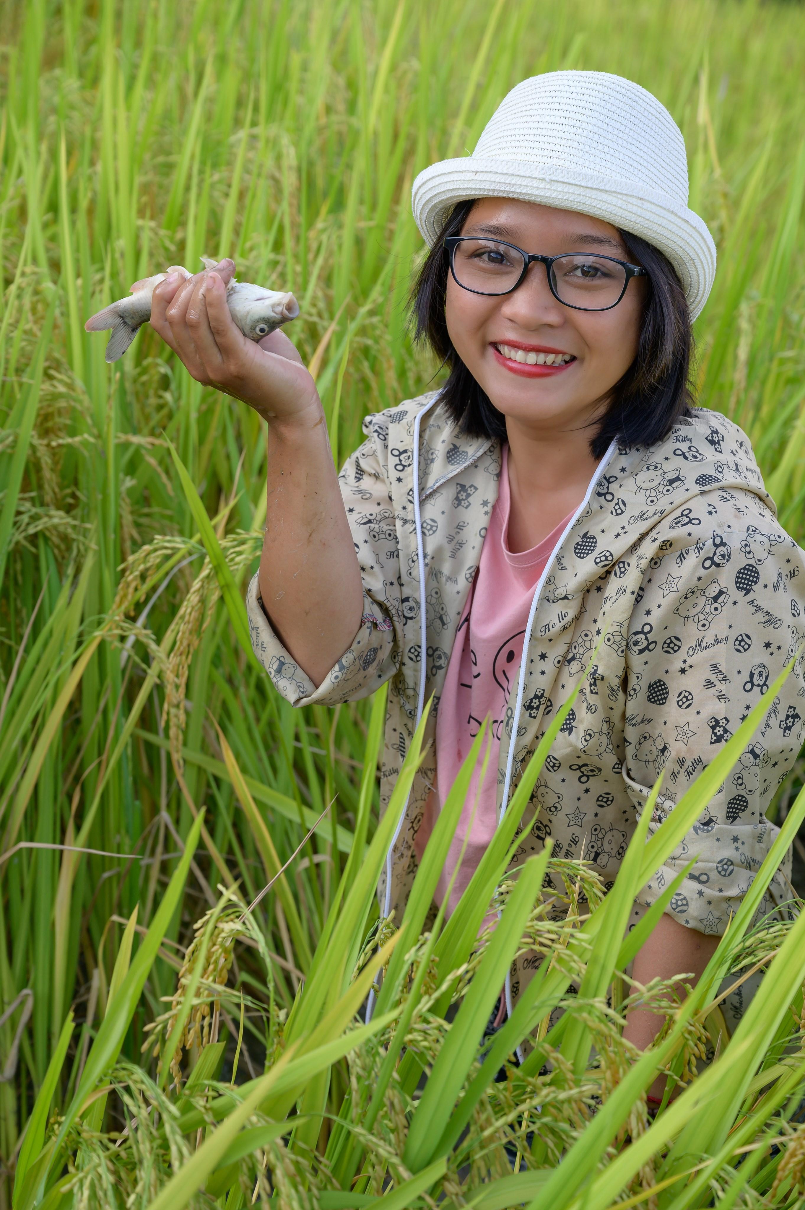 Trên cánh đồng lúa ở Hoàng Su Phì