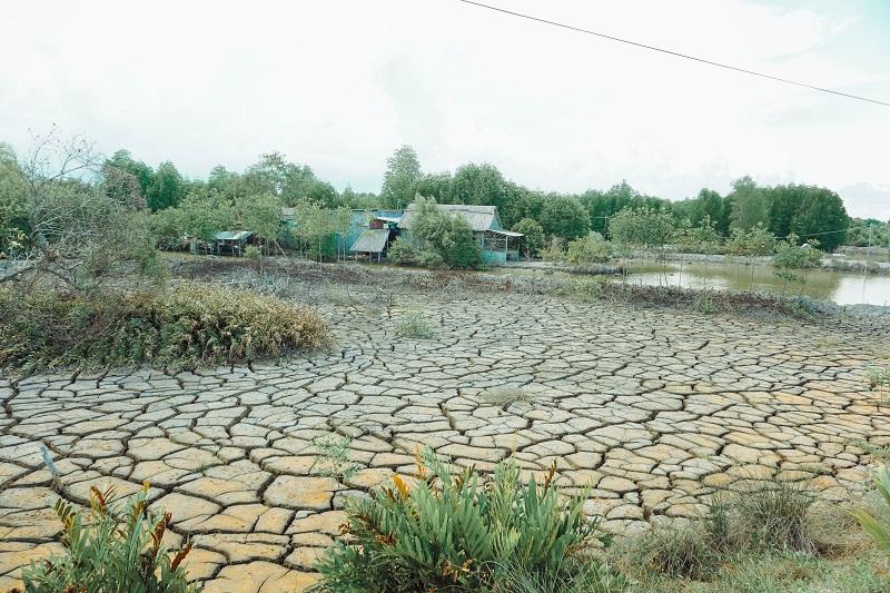 Image result for Đất mũi Cà Mau ngày xưa