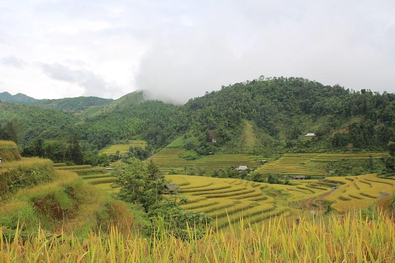 ruong-bac-thang-o-hoang-su-phi (2)