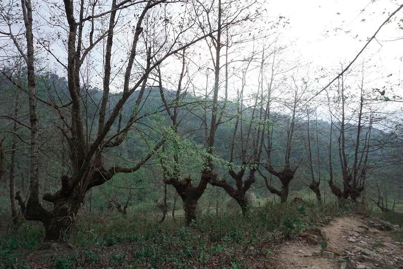 kinh-nghiem-leo-nui-lao-than (2)