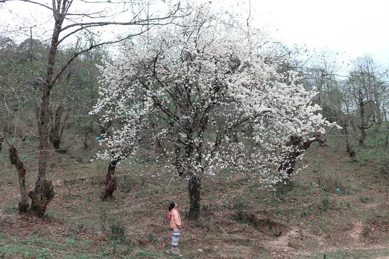 kinh-nghiem-leo-nui-lao-than (4)