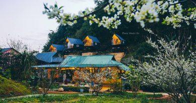4 mùa hoa nở dịu dàng trên Homestay Phố Núi Tình Yêu Mộc Châu