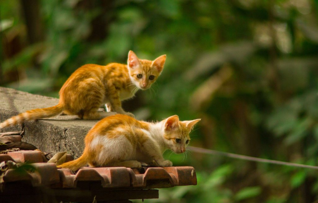 banana-and-rose-homestay-cat-ba (1)