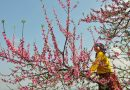 spring in thien huong village