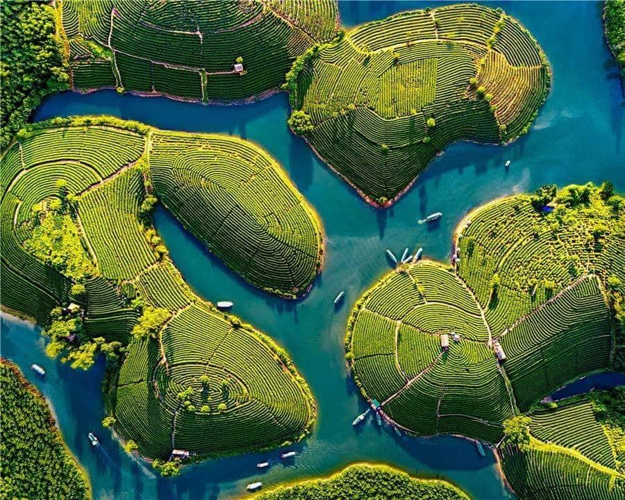tea island