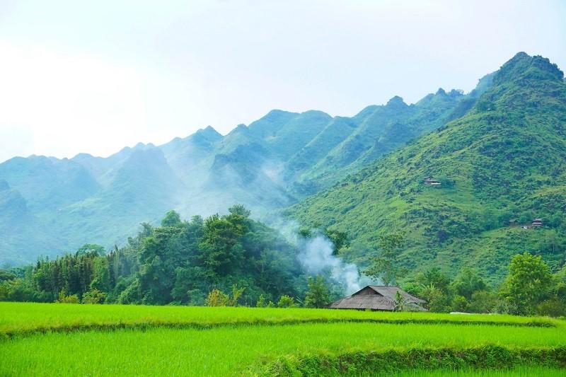 rice in du gia