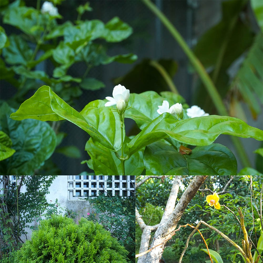 many tree and flower in homestay