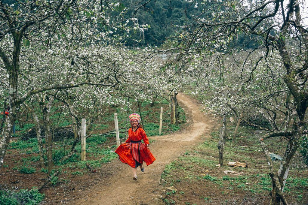 Cô gái Mông lạc giữa vườn mận