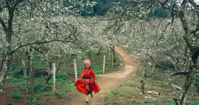 Experience seasonal rebirth as spring descends on Moc Chau valley