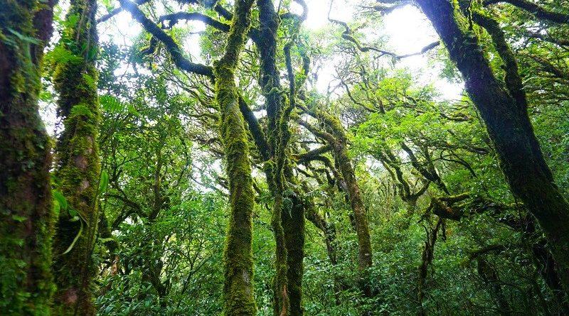 Núi rừng hoang vu ở tây côn lĩnh
